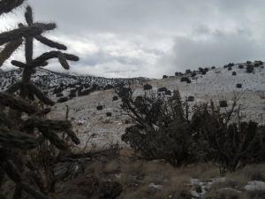 Cactus Vista